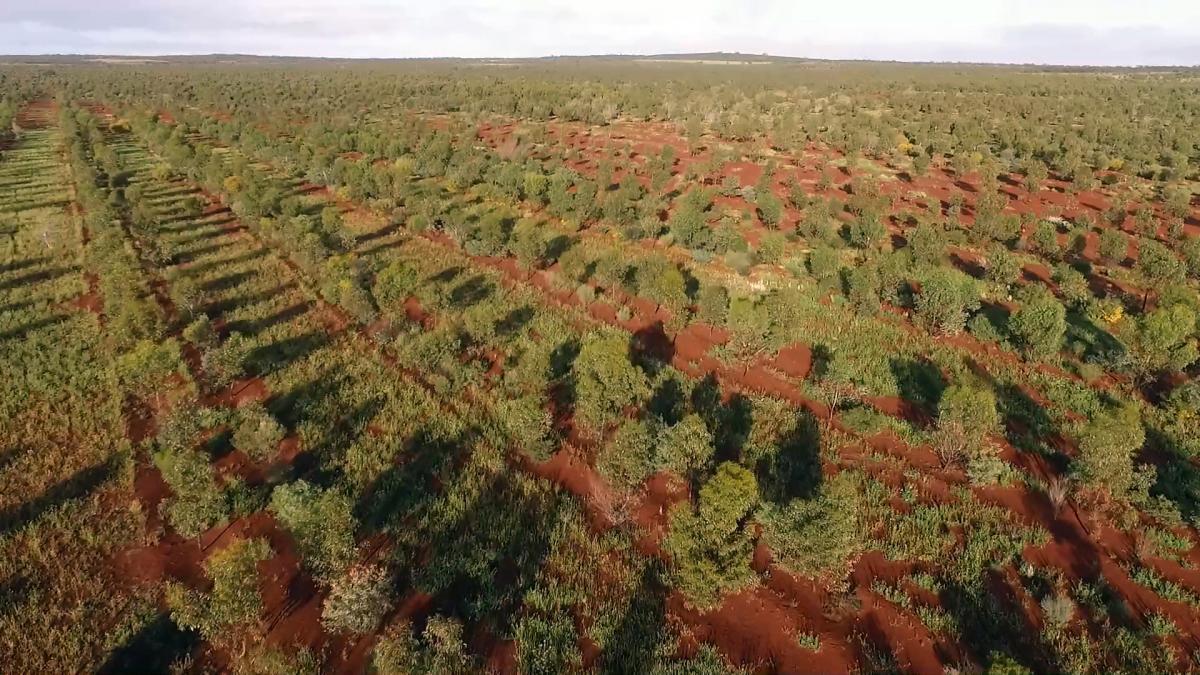 bowgader hills plantation