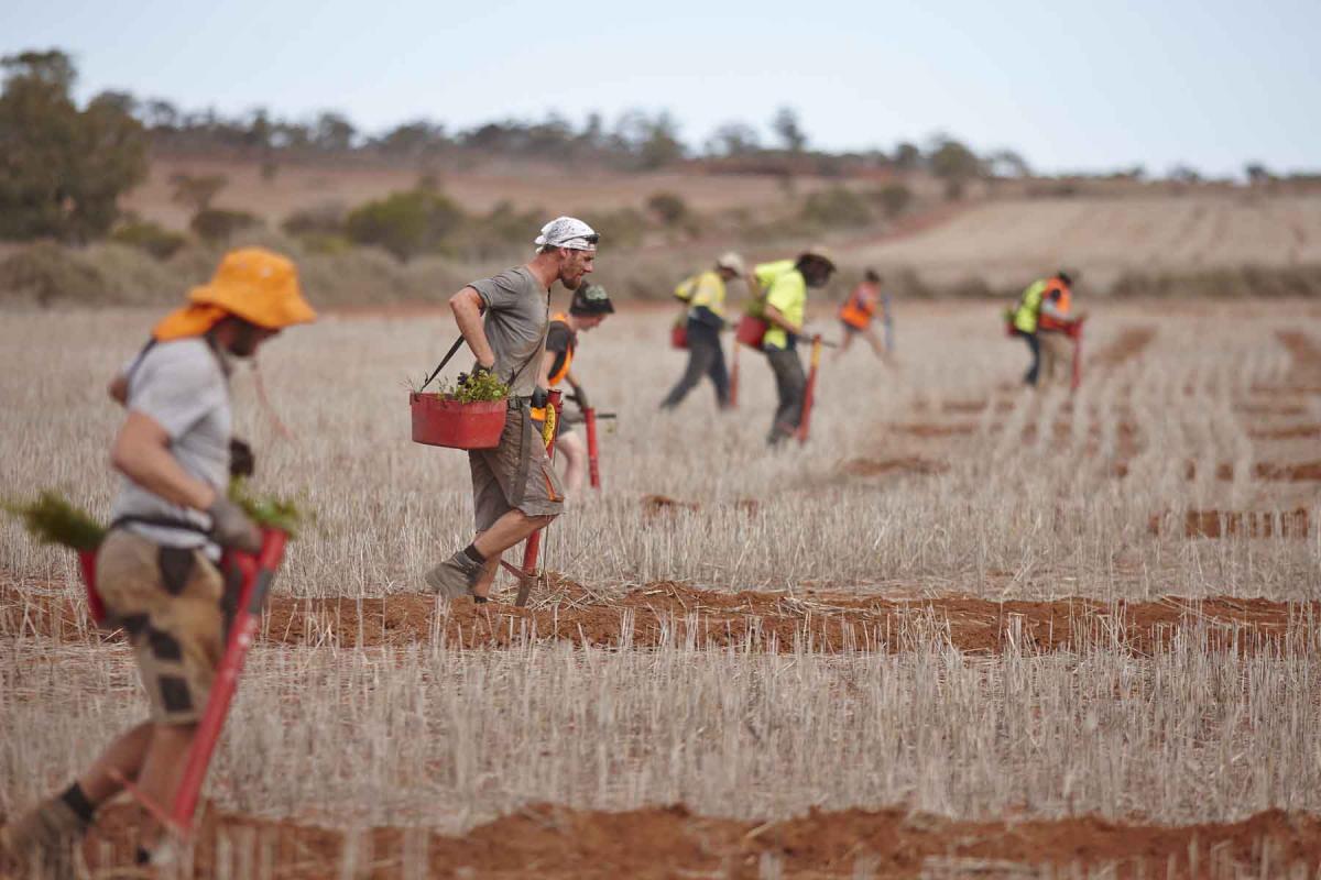 men walking and planting