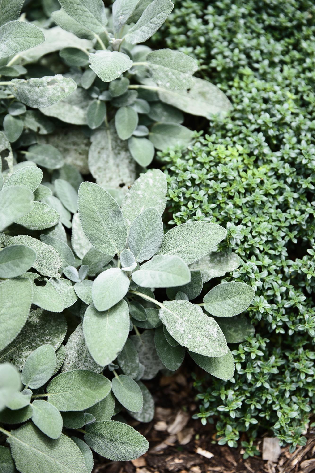 herb garden flinders house image